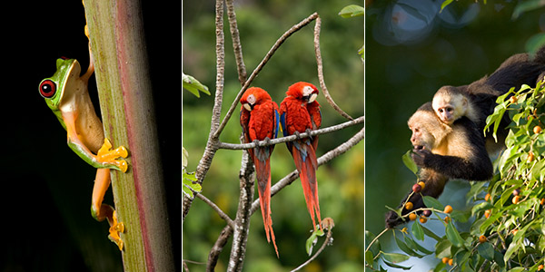animals of costa rica